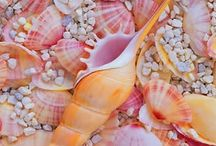 Seashells / by ZombieGirl