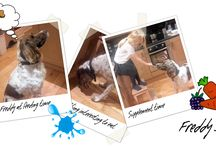 Featured Pets / Customers who have submitted stories bout their pets and we have featured on our website