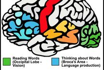 Words and the brain