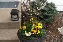 Spring Planters and Containers