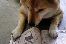 animal / cute funny