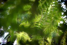 GREEN / #verde #green #natureza #nature