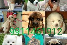 Pets4delhi Pet Shop Delhi