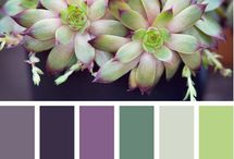 Color Palatte / by Rebecca Larsen