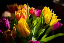 fleurs, fruits, légumes