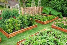 a - veggies garden