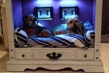doggo beds