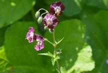 Vadvirágok / Többnyire vadon termő virágok