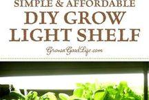 Growing in light shelf