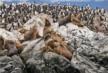 Travel - Argentina, Puerto Madryn