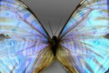 Butterflies / by Teresa Langley