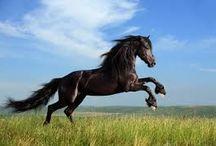 les chevaux / il y a aura que des photos de chevaux