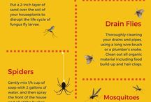 get rid of garden bugs