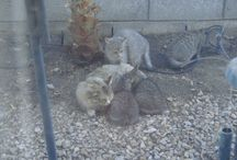 Ferals and Rescue / TheCatSite.com is committed to promoting feral cat welfare and cat rescue efforts. We have an active forum of people who rescue and care for feral cat colonies, so join us there at www.TheCatSite.com.