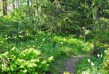 Forrest Garden