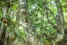 La nature est vivante / regarder au delà de notre espace temps et découvrez la vie, la souffrance, l'amour.