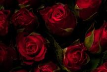 RED - czerwień
