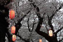 Sakura/Cerezos