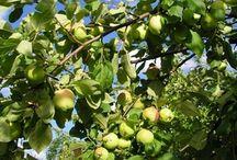 pesticidas para árboles frutales