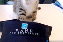 Rand Eye Institute (randeyevision) on Pinterest