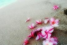 fleurs des iles