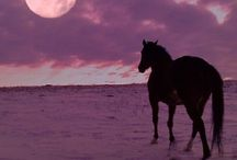 Horses and horse films