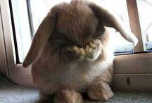 Bunny!!! / by Jamie Kell