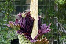 Plants That Fool Nature