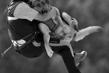 Psy ratownicze