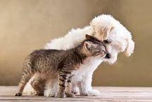 Przyjaźń / czasem łatwiej.....o przyjaźń międzygatunkową...