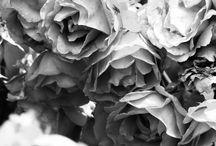 Natürliche Nature / Bilder rund um die Natur mit viel Flora | Pics about and with Nature with lot of Flora