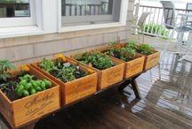 Vegetable garden on balcony /orto in terrazza