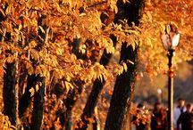 •Autumn ...♡ •