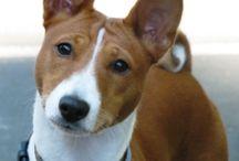 Reggie / Dogs