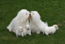 Pampered Pooches! / Dogs! Inspiration & Ideas