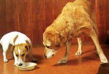 Articoli sul cane