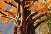 Trees / by Lori Ritchey-Fox