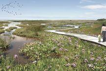Wetland: park
