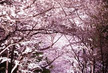 Sakura 2013 / How could I possibly miss Sakura viewing living in Tokyo this year!??  This is my Sakura Wish List for 2013!