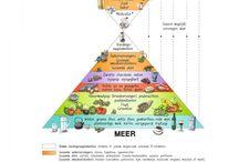 VoedselzandLoper - algemene info / Algemene informatie over de voedselzandloper