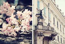 Paris / by Christine Hoar