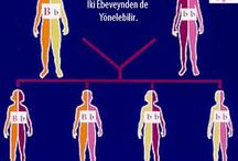 BRCA Gen Mutasyonları / BRCA1 BRCA2 p53 AlfaB Crystallin