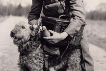 Airedale Terriers at war