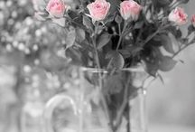 BW+ pink