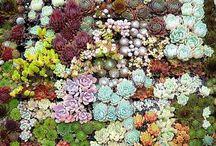 Gardening / by Renee Rogers