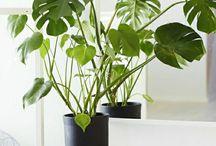 Home: Indoor plants