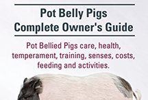 PotBellyPig- name to follow