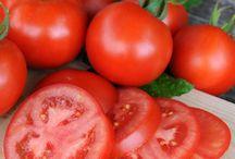 Tomaattitarhani - My Tomatoes in 2015