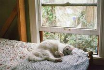 sleeping_cats / sleeping cats