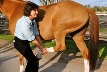 Equine Health & Wellness